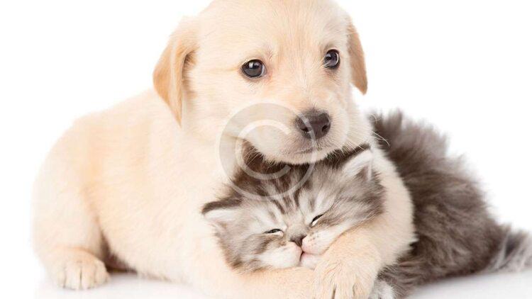 An Inside Look at Helper Animals